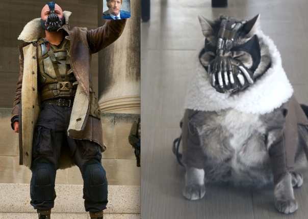 BaneCat Batman Dark Knight